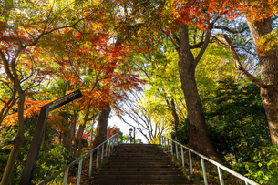 東京都 紅葉する上野公園の写真素材 [FYI04797251]