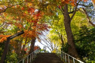 東京都 紅葉する上野公園の写真素材 [FYI04797252]