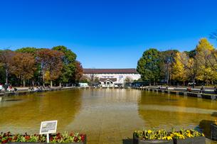 東京都 紅葉する上野公園 東京国立博物館の写真素材 [FYI04797265]
