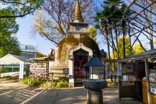 東京都 紅葉する上野公園の写真素材 [FYI04797269]