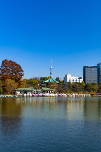 東京都 紅葉する上野公園の不忍池の写真素材 [FYI04797287]