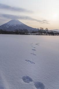雪原に残された足跡の写真素材 [FYI04797328]