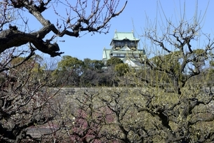 大阪城梅林,梅の木と大阪城天守閣の写真素材 [FYI04797593]