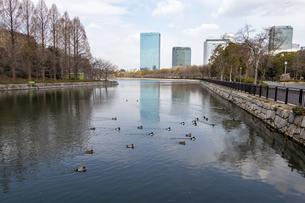 大阪城の外濠と水鳥の群れの写真素材 [FYI04797644]