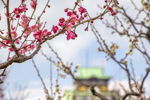 大阪城の梅の写真素材 [FYI04797664]