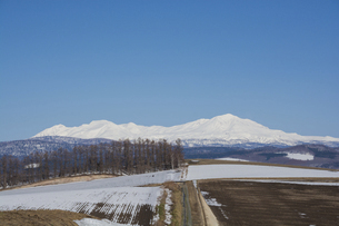 春の残雪の畑と雪山 大雪山旭岳の写真素材 [FYI04797724]