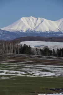 春の晴れた日の残雪が残る緑の畑と雪山 十勝岳連峰の写真素材 [FYI04797725]