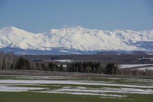 春の晴れた日の残雪が残る緑の畑と雪山 十勝岳連峰の写真素材 [FYI04797726]