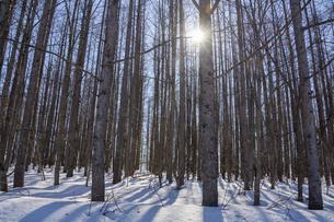 雪が残る春の林と太陽の光の写真素材 [FYI04797729]