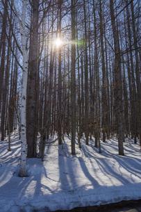 雪が残る春の林と太陽の光の写真素材 [FYI04797730]