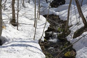 雪が溶け始めた山奥の小川の写真素材 [FYI04797732]