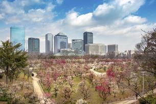 大阪城公園の梅林とオフィスビルの写真素材 [FYI04797788]