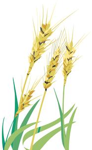 麦のイラスト素材 [FYI04797837]