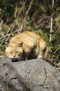 野良猫の写真素材 [FYI04797982]