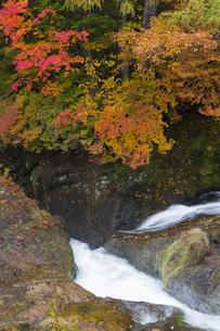 紅葉 竜頭の滝の写真素材 [FYI04798089]