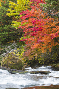 秋の奥日光の写真素材 [FYI04798094]