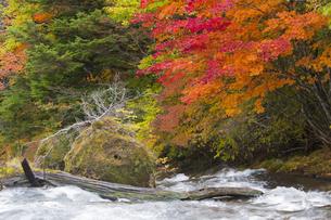 秋の奥日光の写真素材 [FYI04798095]