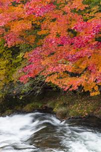 秋の奥日光の写真素材 [FYI04798098]