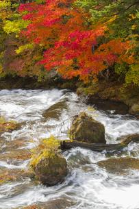 秋の奥日光の写真素材 [FYI04798100]