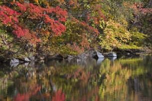 秋の五色沼の写真素材 [FYI04798125]