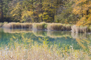 五色沼湖沼群 るり沼の写真素材 [FYI04798130]