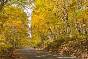 黄葉する山道の写真素材 [FYI04798148]