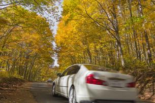 黄葉する山道の写真素材 [FYI04798150]