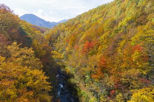 中津川渓谷の紅葉の写真素材 [FYI04798151]