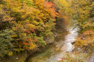 渓流の紅葉の写真素材 [FYI04798159]