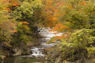 渓流の紅葉の写真素材 [FYI04798160]