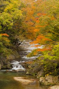 紅葉する渓流の写真素材 [FYI04798161]