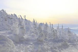 蔵王樹氷の写真素材 [FYI04798240]