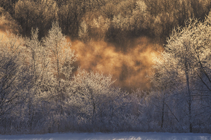 霧氷と気嵐 の写真素材 [FYI04798730]