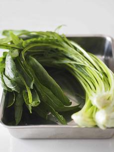 壬生菜の写真素材 [FYI04798767]