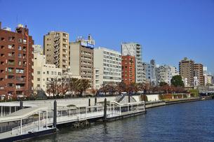 浅草水上バス乗り場付近に並ぶビル群と紅葉した木々の写真素材 [FYI04798989]