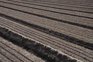 畑の土の写真素材 [FYI04799084]