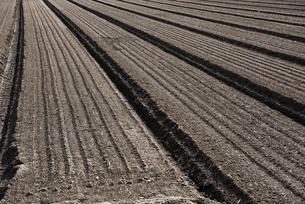 畑の土の写真素材 [FYI04799086]