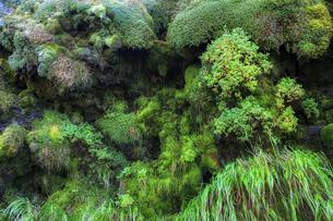 羅臼岳登山道の岩清水の写真素材 [FYI04799233]