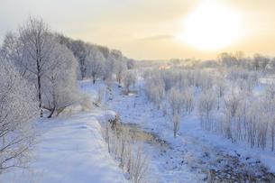 忠別川の霧氷の写真素材 [FYI04799234]