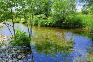 緑と小川の写真素材 [FYI04799304]