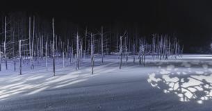 青い池ライトアップの写真素材 [FYI04799362]