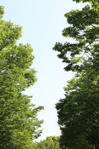 新緑と青空の写真素材 [FYI04799493]