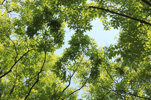 新緑と青空の写真素材 [FYI04799496]