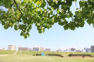 大阪の街並と新緑の写真素材 [FYI04799507]