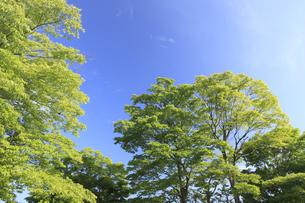 新緑と青空の写真素材 [FYI04799536]
