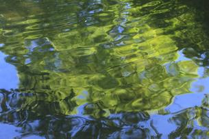 芦ノ湖の水面に映る新緑の写真素材 [FYI04799537]