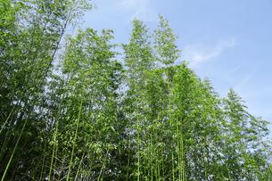 竹林の写真素材 [FYI04799630]