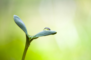新芽の写真素材 [FYI04799676]