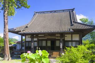 夏の浄専寺の写真素材 [FYI04799775]