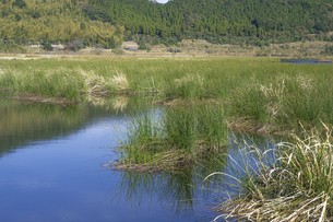 藺牟田池自然公園の写真素材 [FYI04799810]